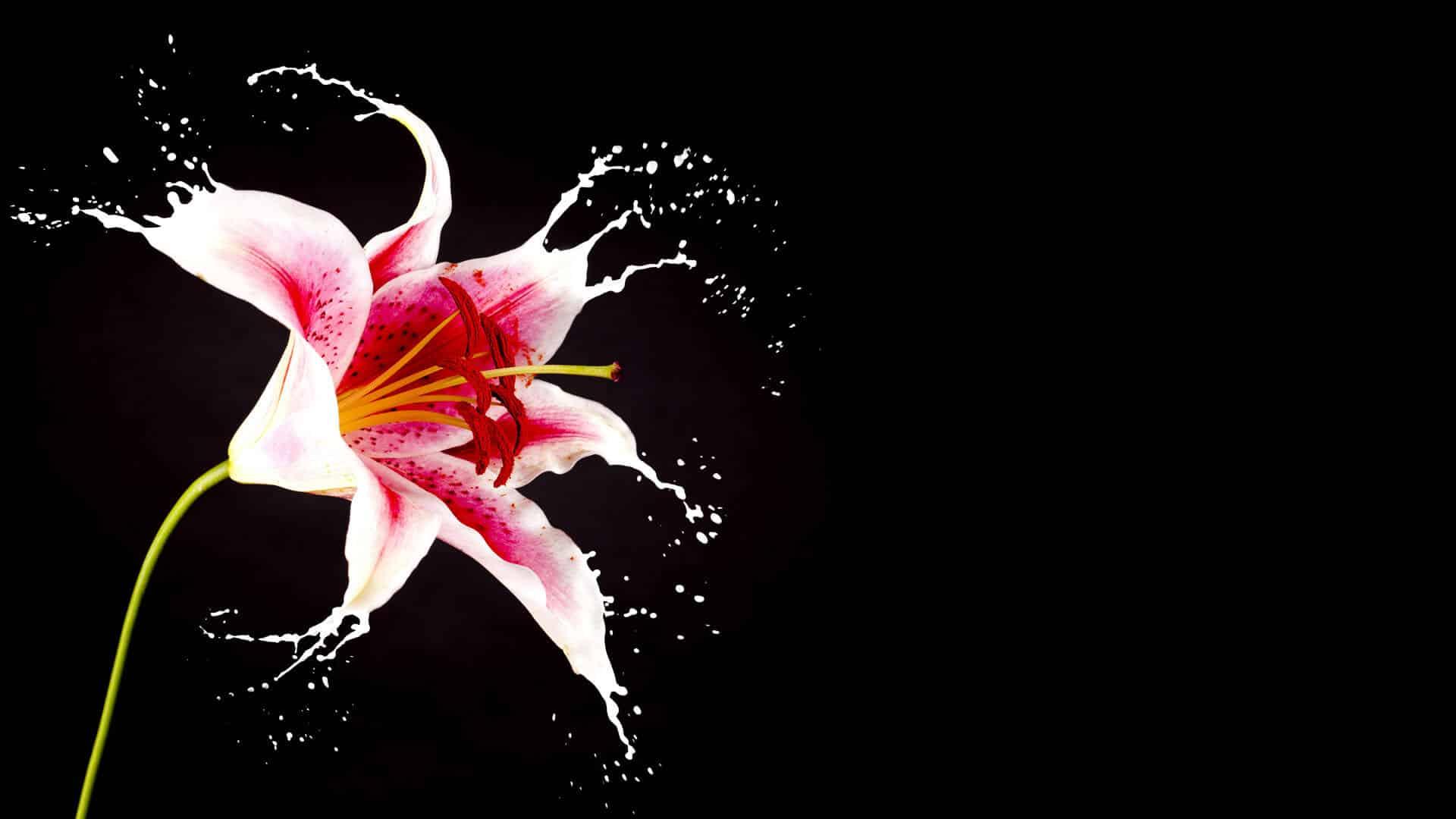La boutique del fiore carollo fiori centrale di zugliano vi for Immagini 1920x1080