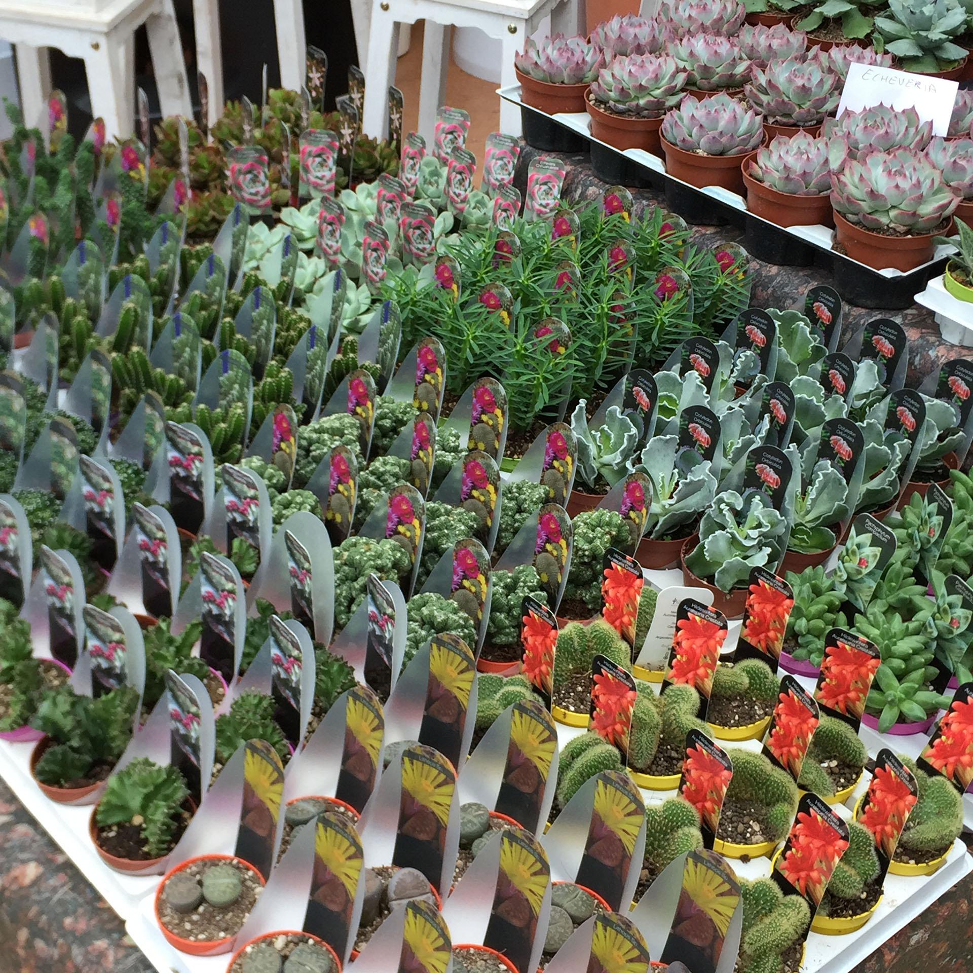 Piante grasse 2 carollo fiori for Piante rare
