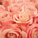 San Valentino 2016 Rose