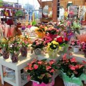 garden carollo fiori centrale di zugliano vicenza